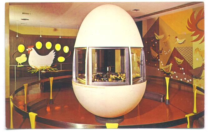 CMSI Postcard - Giant Egg