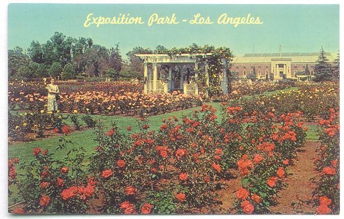CMSI Postcard - Rose Garden